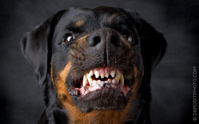 Tierbisse oder -stiche: Zahlt die Unfallversicherung